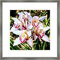 Pink Spirit Orchids Palm Springs Framed Print