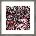 Pink - Plant - Petals Framed Print