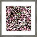Pink Petals On Stones  Framed Print