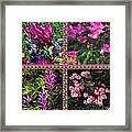 Pink Purple Flowers Captured At The Riverside Ridge At Oakville Ontario Canada Collage Beautiful     Framed Print