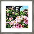 Pink Roses Near Trellis Framed Print