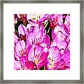 Pink Summer Blossoms Framed Print