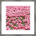 Pink Tulip Carpet  Framed Print