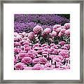 Pink Waves Framed Print