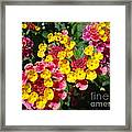 Meadow Melody Framed Print