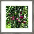 Pitaya Fruit Trees Framed Print