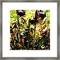 Pitcher Plant Abstraction Framed Print