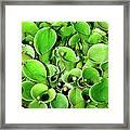 Pitcher Plants Palm Springs Framed Print