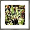 Pixie Cup Lichenscape Framed Print