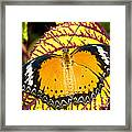 Plain Tiger Butterfly Framed Print