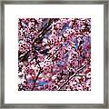 Plum Tree Flowers Framed Print