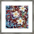 Plumeria Splash Framed Print