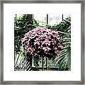 Poinsettia Tree Longwood Gardens Framed Print