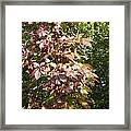 Poisin Oak Framed Print