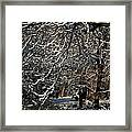 Polar Vortex Beauty Framed Print