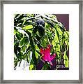 Polka Dot Easter Cactus Framed Print