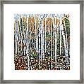 Poplar Art Framed Print