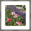 Poppies And Lavender Framed Print