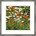 Poppy Fields - Beautiful Field Of Spring Poppy Flowers In Bloom. Framed Print