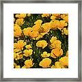 Poppy Fields  Framed Print