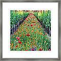 Poppy Lined Vineyard Framed Print