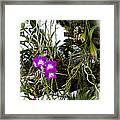 Portrait Of Orchids Framed Print