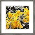 Power Of Yellow Framed Print