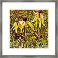 Prairie Coneflowers In Pipestone National Monument-minnesota  Framed Print