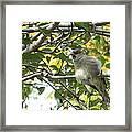 Pretty Little Bird Framed Print