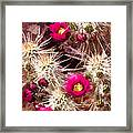Prickley Cactus Plants Framed Print