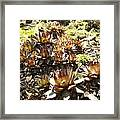 Prickly Lilies Framed Print