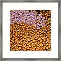 Profusion In Yellows Pinks And Oranges Framed Print