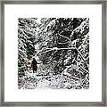 Protective Forest In Winter With Snow Covered Conifer Trees Framed Print