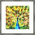 Proud Peacock Framed Print