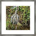 Proud Heron Framed Print