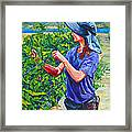 Pruning The Pinot Framed Print