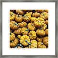 Pumpkin Galore. Framed Print