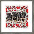 Puppy Love Framed Print