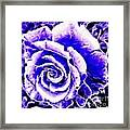 Purple And Blue Rose Expressive Brushstrokes Framed Print
