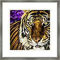 Purple And Gold Tiger Framed Print