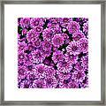 Purple Blanket Framed Print