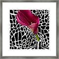 Purple Calla Lily Framed Print