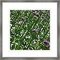 Purple Caps Framed Print