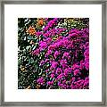 Purple Contrast Framed Print