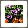 Purple Daisies And A Touch Of Orange Framed Print
