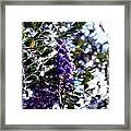 Purple Flowering Tree Framed Print