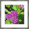 Purple Flowers A Framed Print