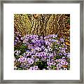 Purple Flowers At Base Of Tree Framed Print