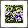 Purple Flowers Lookiing Like Daisies Framed Print