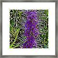 Purple Fringe On Bald Mountain In Ketchum-idaho Framed Print